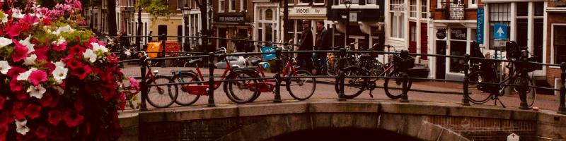 university in netherlands